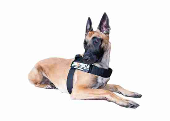 Cani Anti Cimici e mezzi fisici VS Cimice dei letti: una storia vera