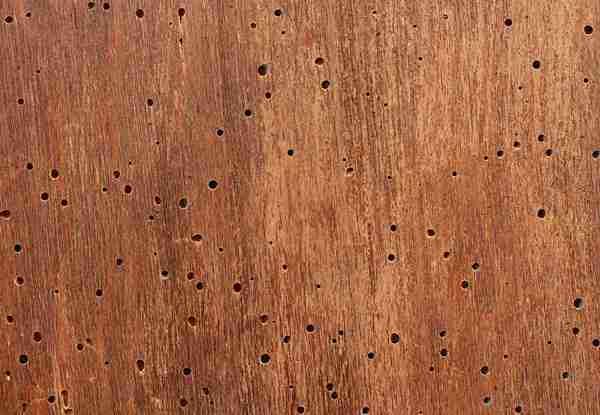 Liberati dai Tarli dei mobili e dagli acari del legno in modo ecologico e definitivo!