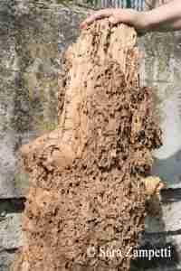tronco termiti