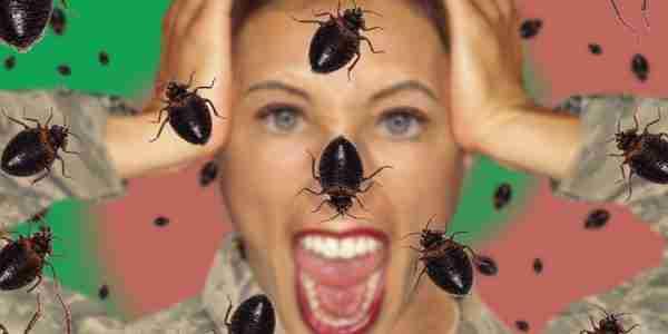 insetticidi cimici dei letti