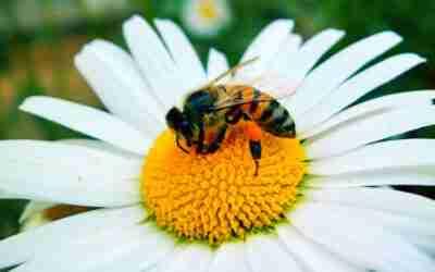 Dammi 5 minuti e ti svelerò perché non devi usare insetticidi per eliminare insetti o acari