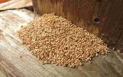 Come eliminare le termiti: rivolgersi ad un professionista o provare il fai da te?